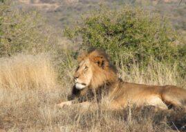 Booking a Safari Post Covid with us