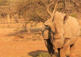 Rhino River Lodge: September 2017 Newsletter
