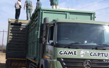 Rhino Capture Ezemvelo KZN Wildlife