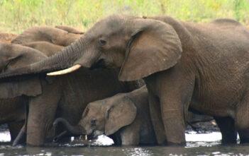 Pongola Game Reserve, White Elephant Safari Lodge