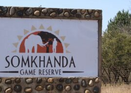 Somkhanda Game Reserve: A Bush Education