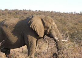 Springbok Lodge: A Busmans holiday within a holiday