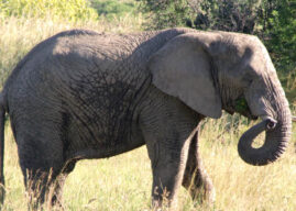 The Nambiti Elephant Herd