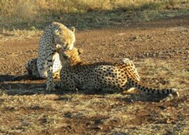Our Two Week Trip – Beaches to Safaris to Whales – KwaZulu Natal Has It All!
