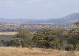 Rhino Sands Safari Camp: Luxurious & Eco Friendly