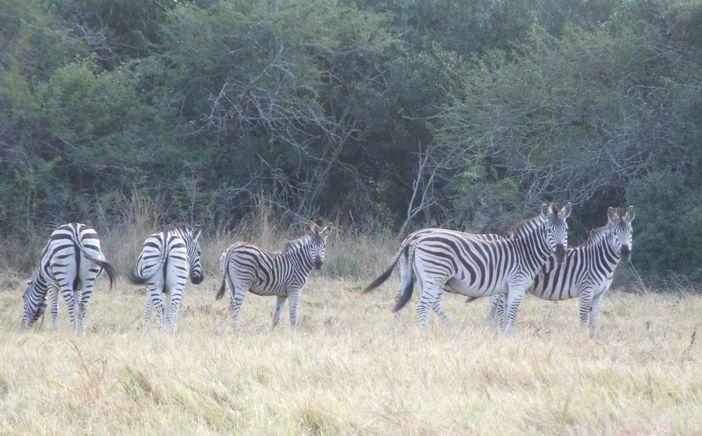 Bonamanzi Game Reserve