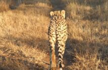 Safari Booking KwaZulu-Natal SafariKZN