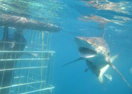 Deep Breath, Deep Breath….. for Shark Cage Diving
