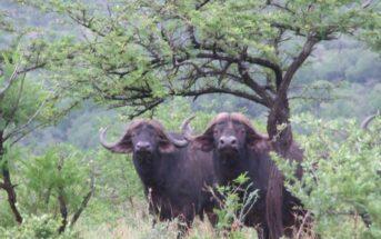 Umfolozi Big Five Mthembu Lodge