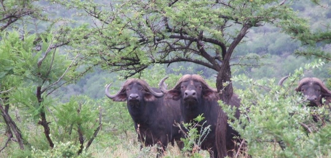 Umfolozi Big Five Mthembu Lodge